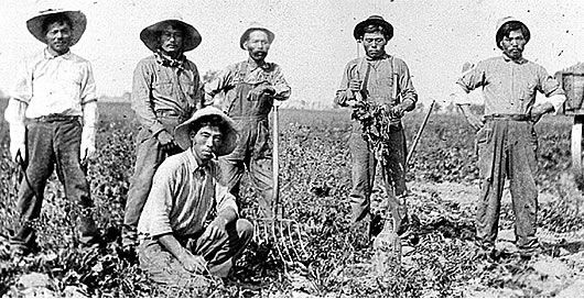 american agriculture 1880 1910 essay example This research uses aggregate statistical sources to describe agricultural diversity in a 31 county area of appalachian kentucky over the period 1880–1910 in.